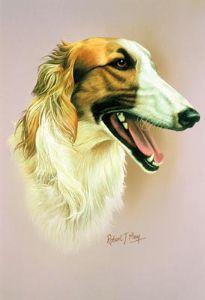Borzoi head study | Hounds | Pinterest | Large dogs, Dogs ...